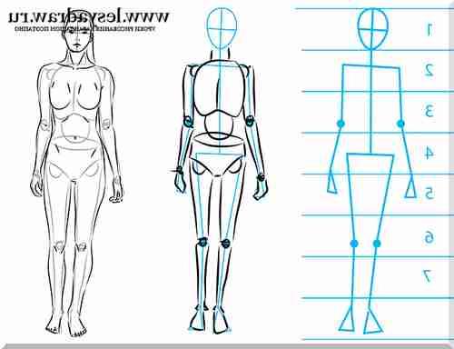 Схемы для рисования тела